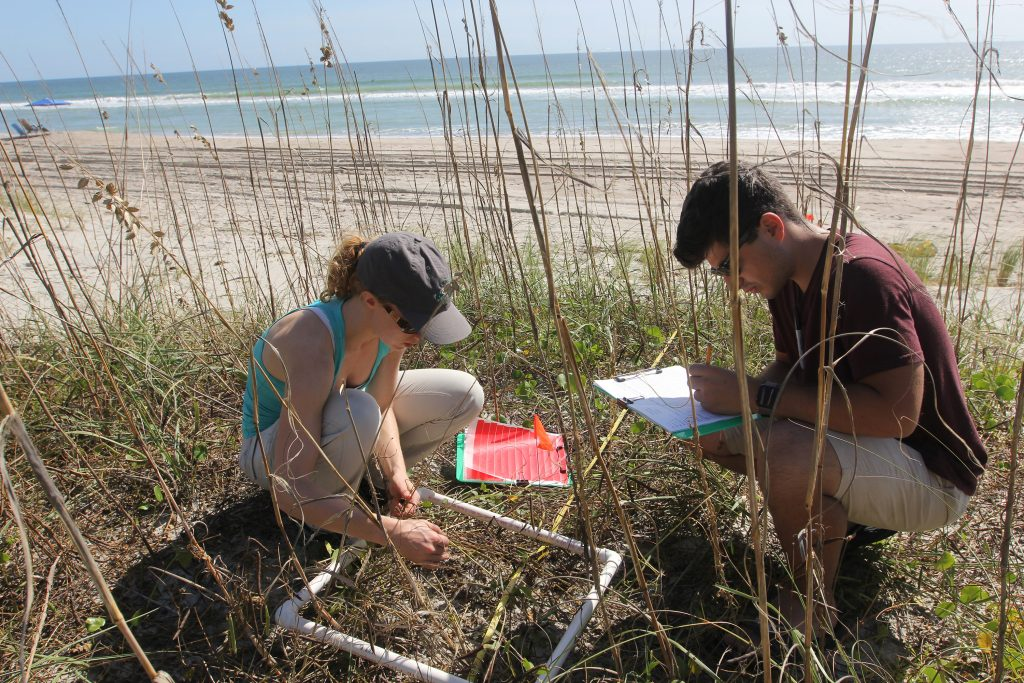 Paige Havenga (left) and Michael Itzkin use a quadrat to quantify the amount and variety of vegetation on a dune. (photo by Mary Lide Parker)