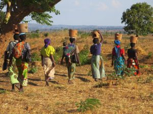 Women walk home carrying fuel-saving cookstoves in Kasungu, Malawi. A new $4.8 million NSF grant will help researchers study how to alleviate energy poverty in Southern Africa.