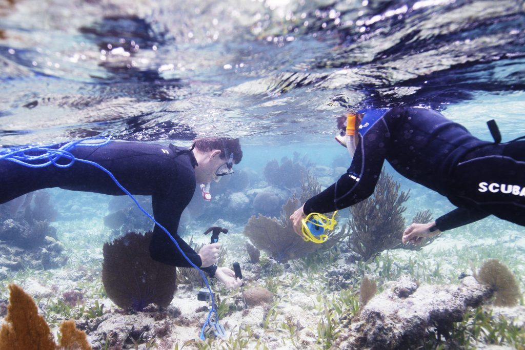Justin Baumann, a Ph.D. student in the College's department of marine sciences, works alongside Mariko Wallen, a local diver, in Placencia, Belize.  To gather data on how certain types of coral respond to stressors (like warmer water temperatures), Baumann partnered with Fragments of Hope, a Belizean NGO dedicated to conserving coral reefs in the Caribbean. (photo by Mary Lide Parker)