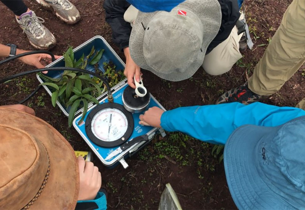 Students take measurements of soil and plants in the Galapagos.