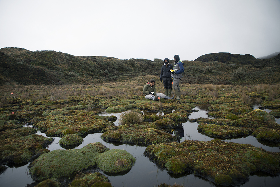 Students drop a sensor into a peatland pool