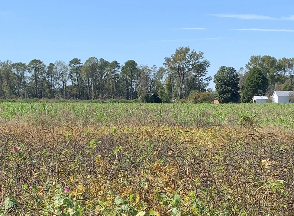 A field in Robeson County.