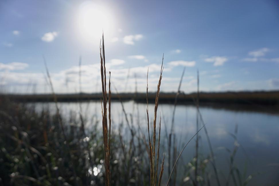 A Landscape image of the Matanzas River
