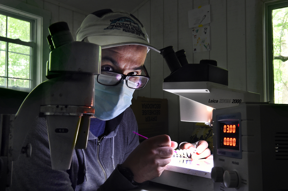 Daniel Matute at his microscope in his home lab.