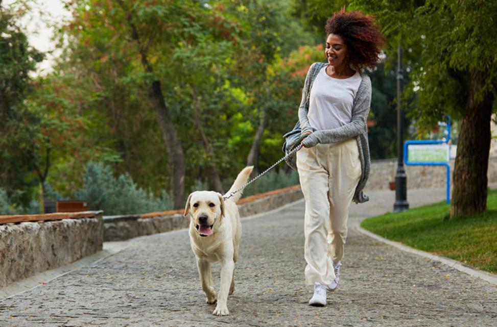 A woman walks a dog.