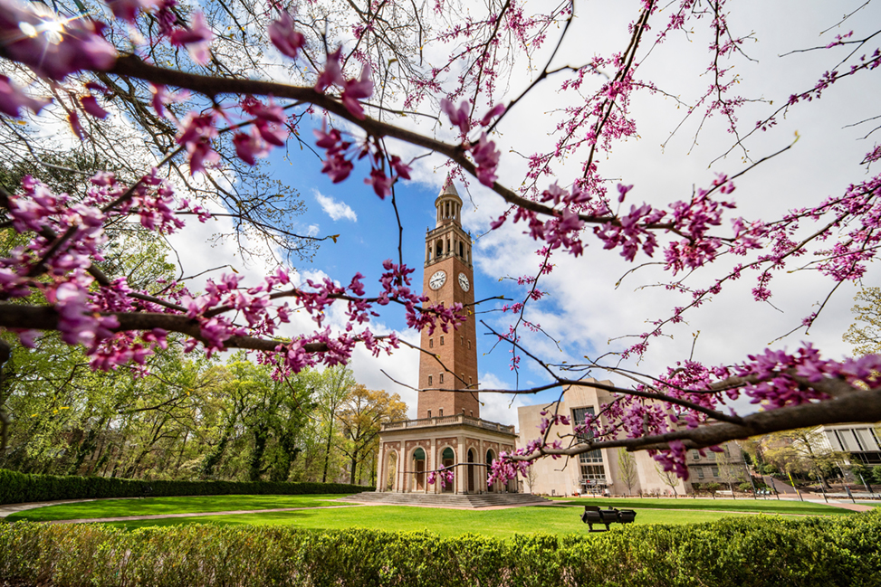 Purple flowers on tree branches in front of the Morehead-Patterson Bell Tower at the University of North Carolina at Chapel Hill on March 25, 2020.